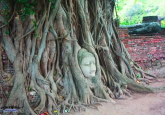cosa vedere e fare ayuthaya thailandia 10