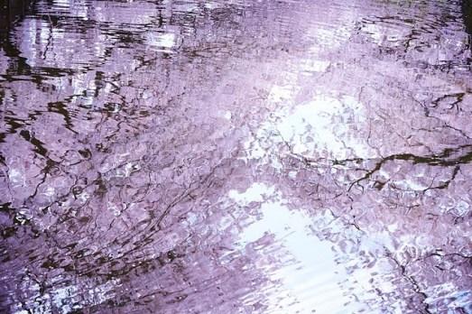 tokyo hanami ciliegi in giore giappone 7