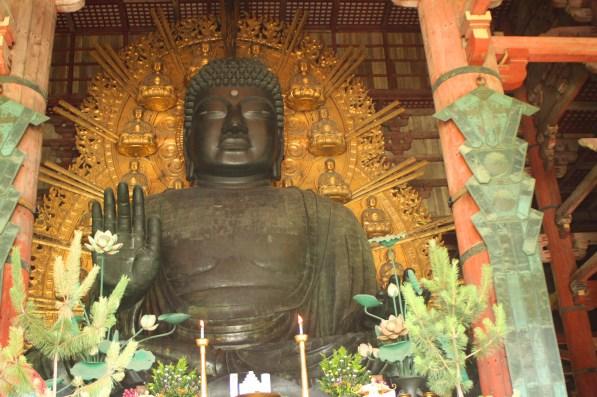 Giappone templi nara cervi giapponese (15)