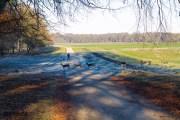 cosa-vedere-a-copenhagen-in-3-giorni-dintorni-klampenborg-parco-dei-cervi (6)
