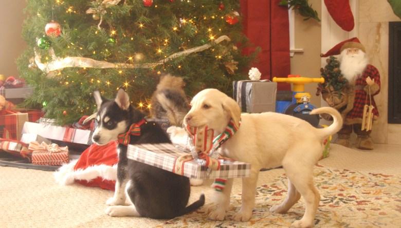 Fall Puppy Wallpaper Puppies Crash Christmas Hulu S New Yule Log Alternative