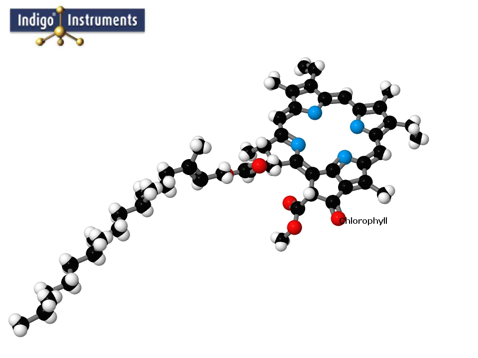 Chlorophyll Molecule Complex Structure Model built with