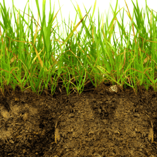 Grass roots - soil analysis