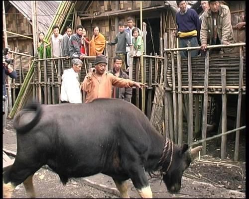 Sacrificio del mithu durante un funerale al villaggio apatani di Hang