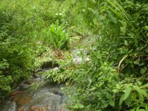 rio Panelão