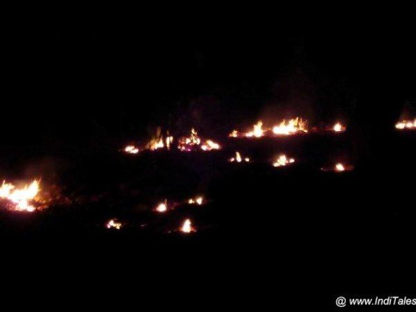 रात को जलते महुआ के जंगले