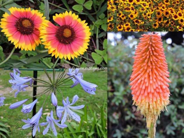 शिमला राष्ट्रपति निवास के आँगन के रंग बिरंगे फूल