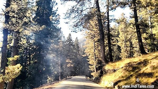 श्रीनगर से गुलमर्ग का मार्ग