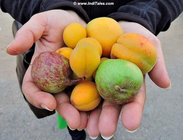 फलों के भरपूर हिमाचल प्रदेश