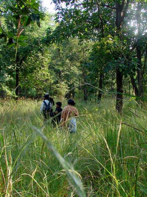 पैदल जंगल सफारी