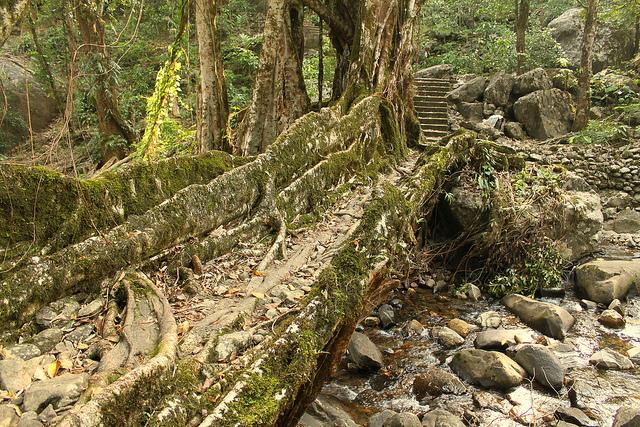 Root Bridge Maghalya India