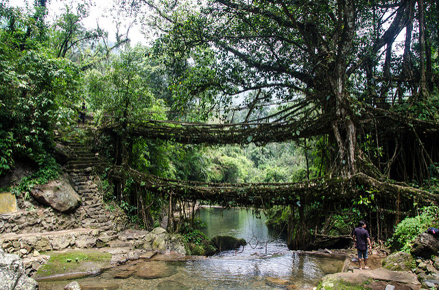 Double Decker Living Root Bridge