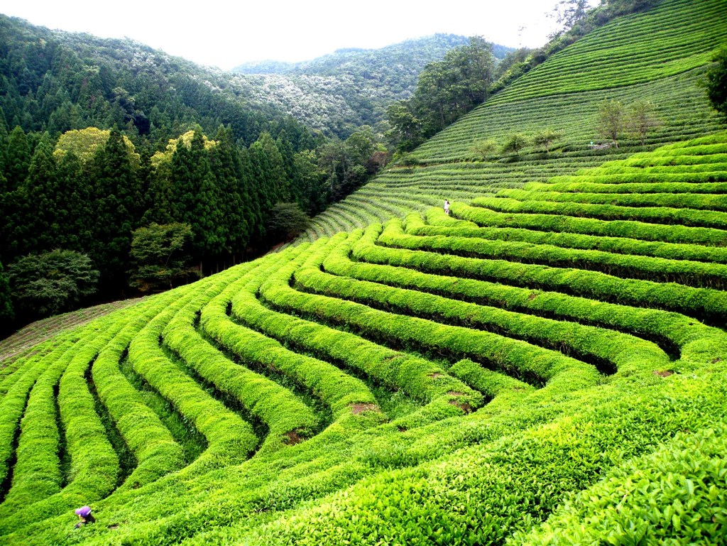 Happy-Valley-Tea-Garden