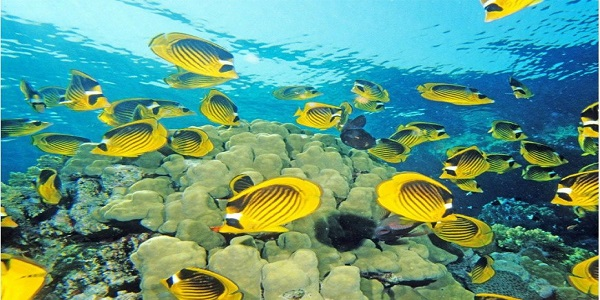 Fishes in deep water