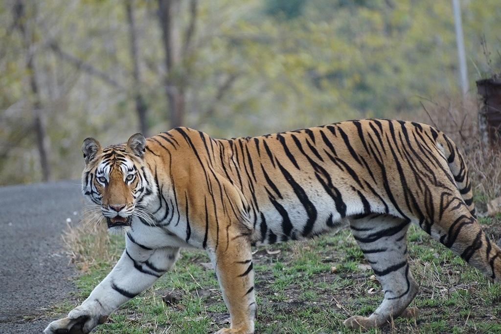 Wild Life Arunachal Pradesh