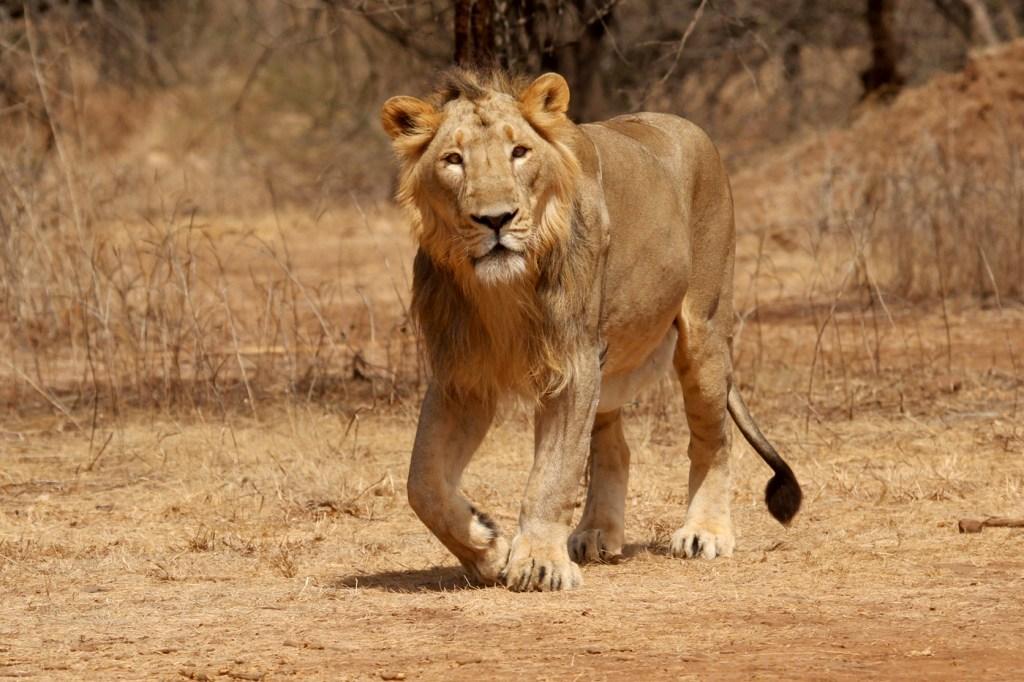 Gir National Park Gujarat