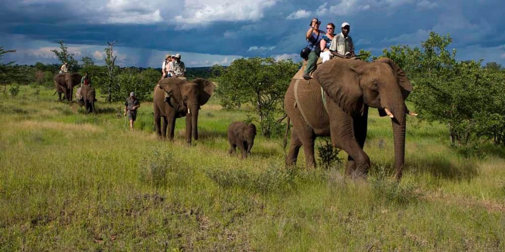 elephant safari jim corbett