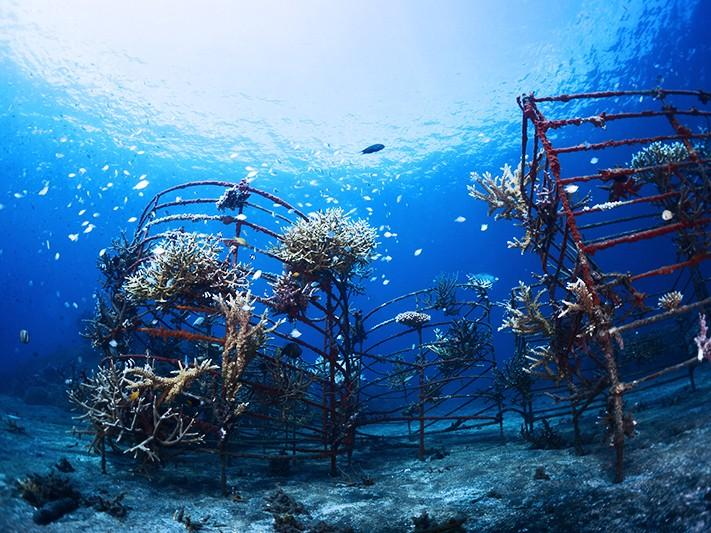 The Buleleng Bali Dive Festival Coral Reef Conservation