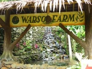 Kebun durian warso / warso farm - jakartatraveller