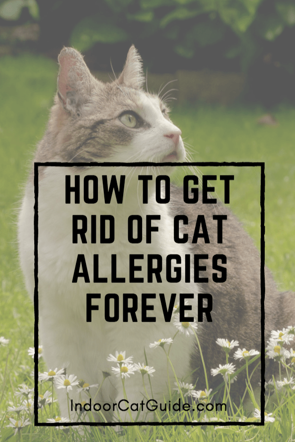 how to get rid of cat allergies forever
