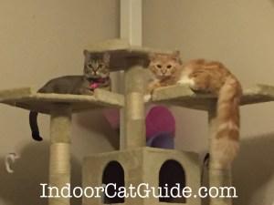 best cat climber | best kitty condo