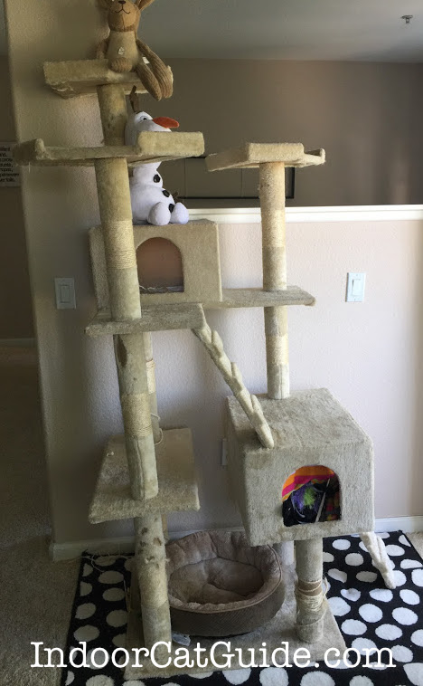 best cat tree for multiple cats