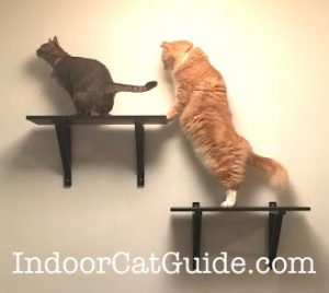 make your own shelves for cats