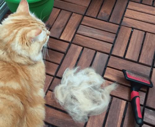 best cat grooming tools