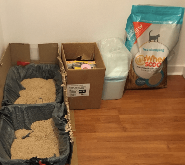 best natural cat litter and litter box
