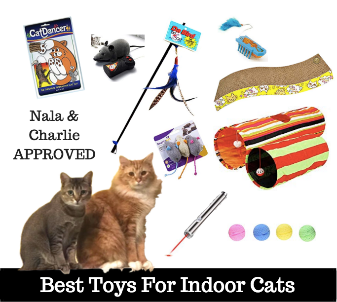 best toys for indoor cats