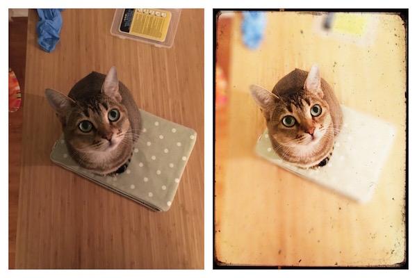 cat photo contests