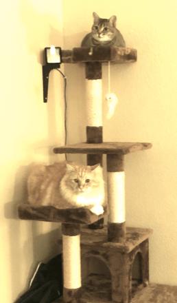 best cat condo on amazon