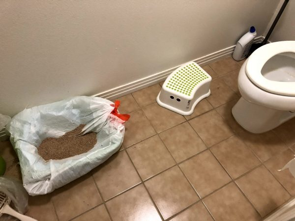clean litter box confident cat