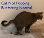 cat not pooping but acting normal
