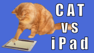 Free Games on iPad for Cats
