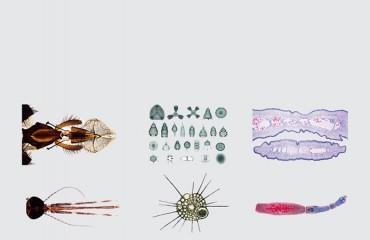 Microscope Slides Bottom grey background
