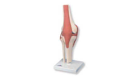 Deluxe Functional Knee Joint