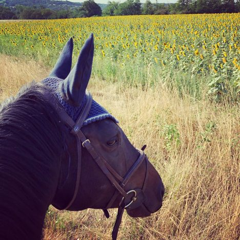 My Review of Fly Off Horse and Rider Starter Kit