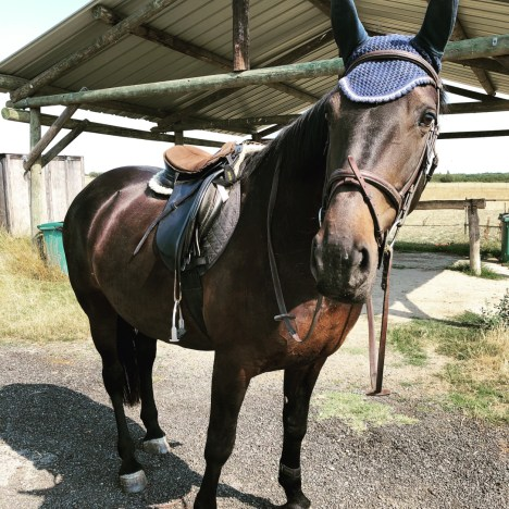 Flies. What Horse Owners Can Do To Make Them Buzz Off!