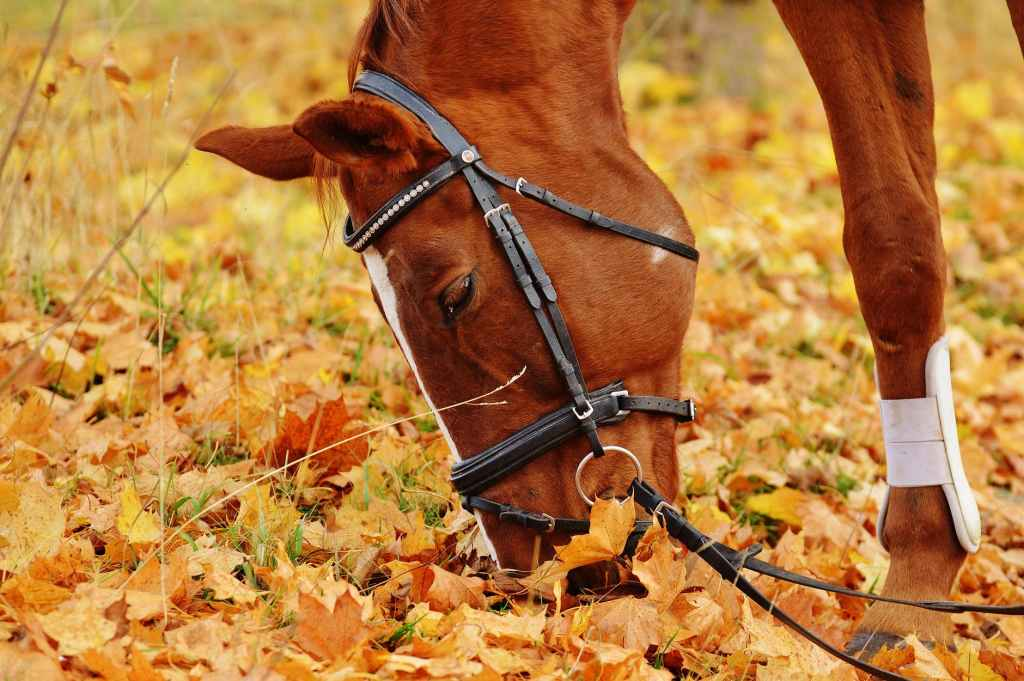 animal meadow leaves autumn