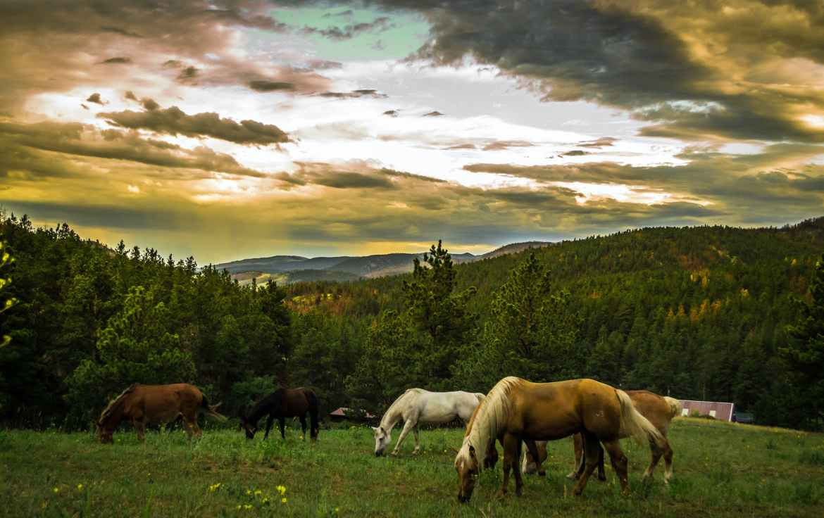 landscape mountains nature horses