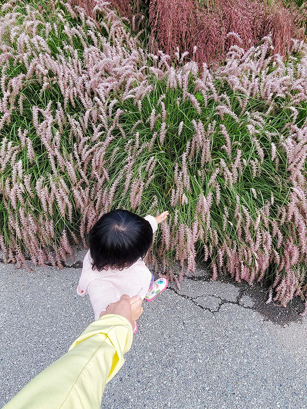 Baby outdoors touching pink plants. Exercise outdoors can help baby transition to one nap.