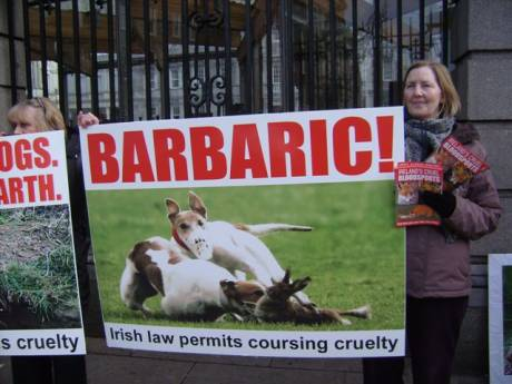 Protester calls for hare protection