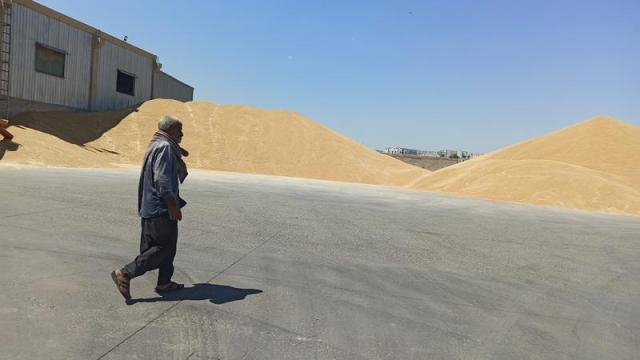 buğday tarla arpa indyTR (2).jpg
