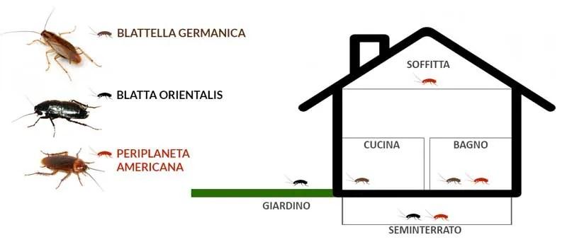 Scarafaggi e blatte in casa: ecco ... - Disinfestazioni Roma