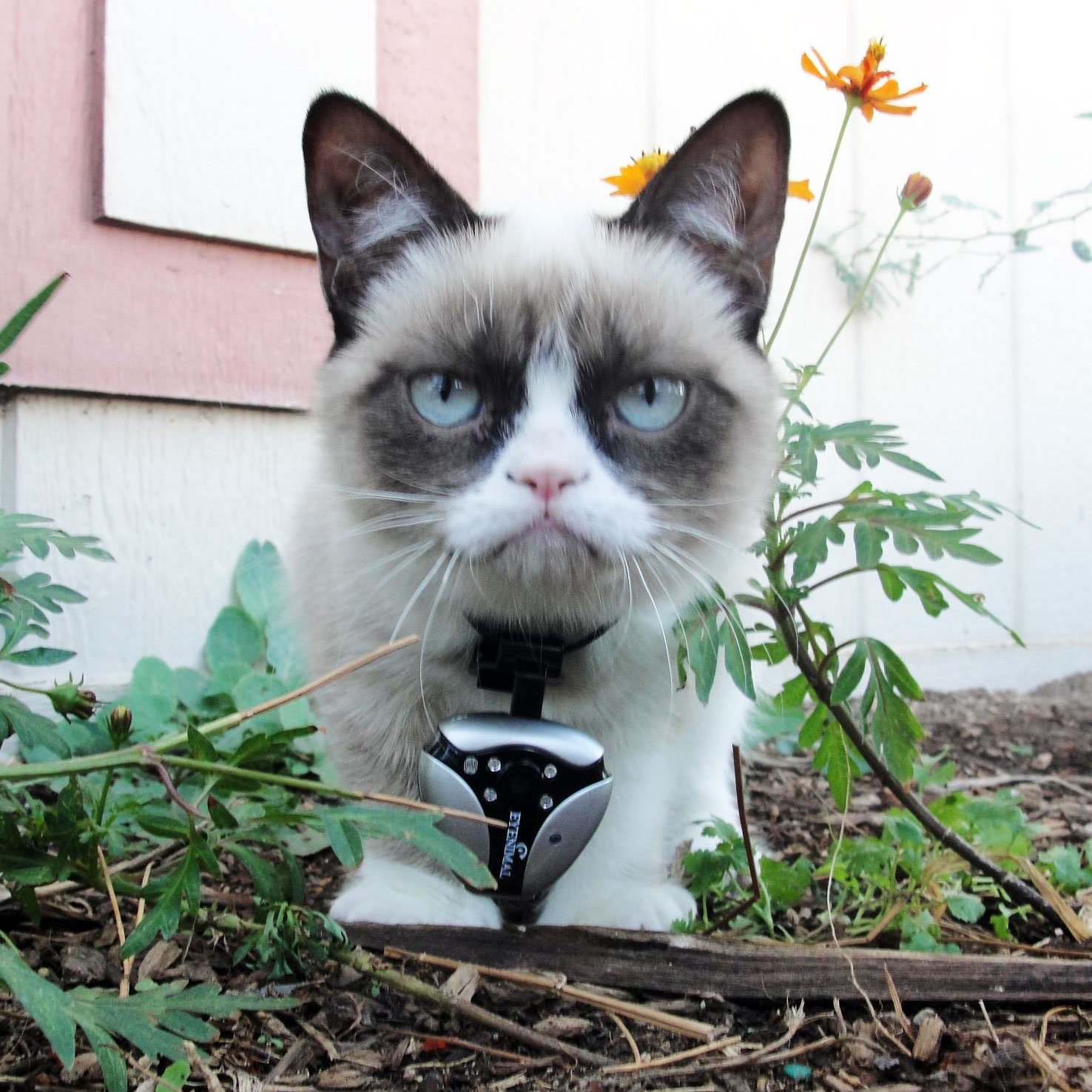 DOGTEK Eyenimal Cat Video Camera with Night Vision