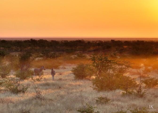 Mountain zebra's during a beautiful sunrise at Olifantsrus, Etosha.