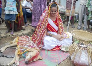 The dog, Sheru, a stray, falls asleep during the lavish ceremony.