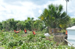 Inmates of the Georgetown Prison clearing the overgrown bushes at Le Repentir cemetery. [GINA Photo]