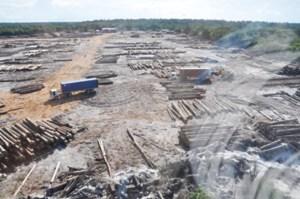 Bai - Shan - Lin log yard.